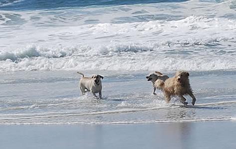 carmel dog friendly lodging - carmel beach dog with couple