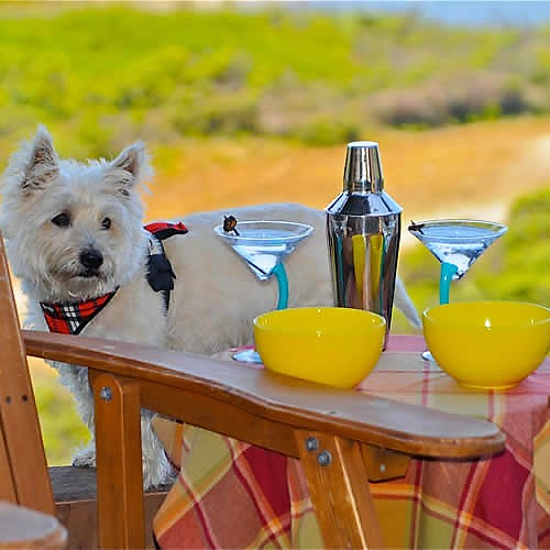 carmel boutique inn dog friendly with drinks